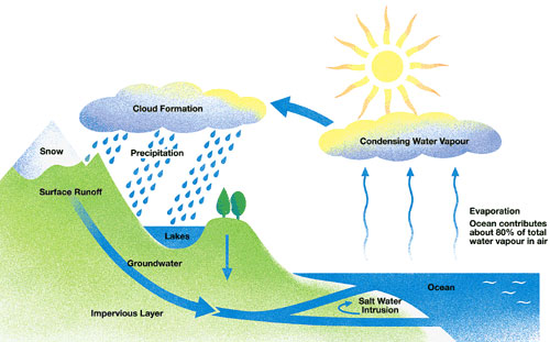 The water cycle as middle school taught us.