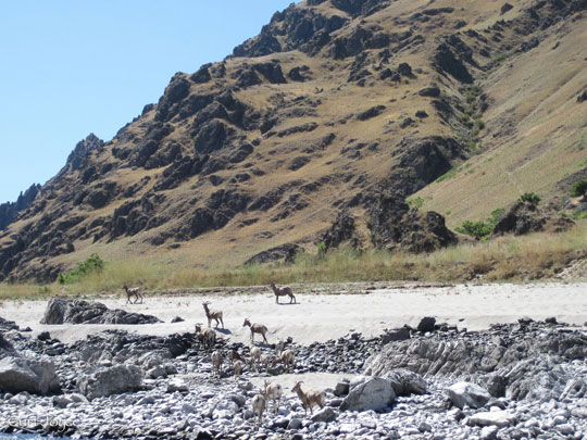 Wildlife and mountains in Idaho's Lower Salmon River.