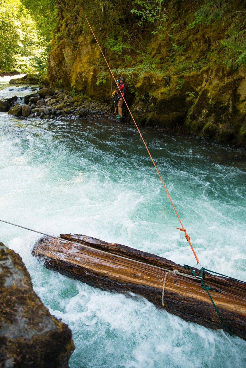 Wood in rivers can serve as critical salmon habitat if located in a calm stretch of river.