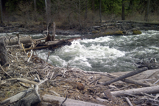 Log jam on the Klickitat River