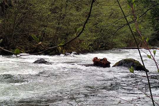 New Log in the White Salmon River