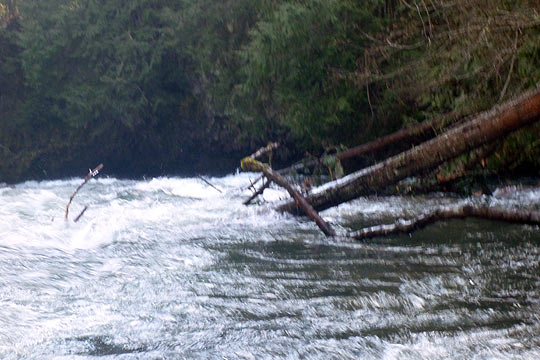 The Cave rapid on the Middle White Salmon contains a tree blocking the normal right line, at least for now.