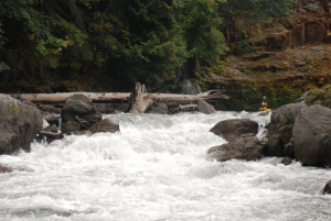 Elwha River Rapid